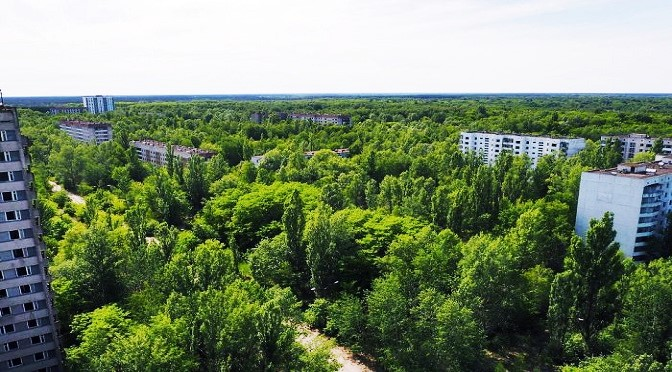 The Spectacular Revival Of The Natural World Around Chernobyl
