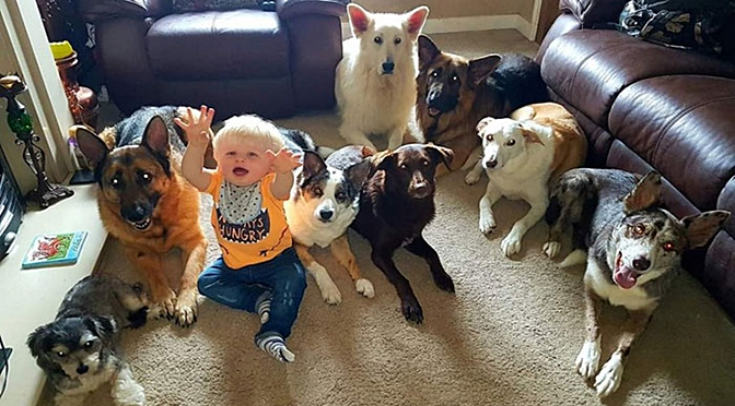 This Woman Manages To Make 17 Pets Sit Idle For A Family Photo