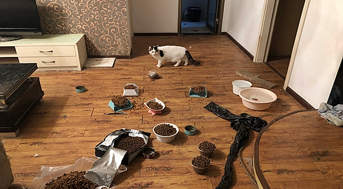 Group Of Volunteers Are Rescuing Pets From Abandoned Apartments In Wuhan Following CoronaVirus Outbreak