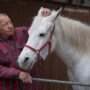 Meet Jenny The Horse That Has Been Strolling Through The Streets Of Fechenheim for 14 Years